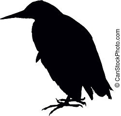 Bittern bird, black vector silhouette