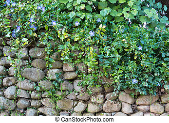 Stone Wall Plants - Wonderful stone wall cover with very...