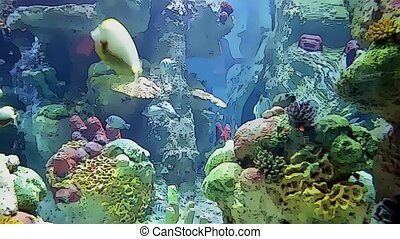 marine life under the sea in toon - Coral reefs and marine...