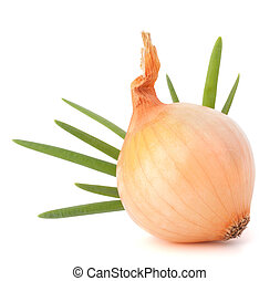 Onion bulb on white background cutout