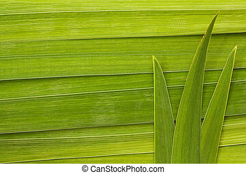long leaf background - Long palm leaf detail background...