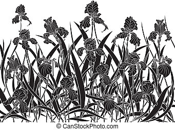 irises - vector illustration of irises in black and white...