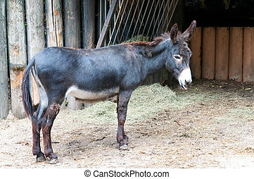 funny little donkey in the zoo