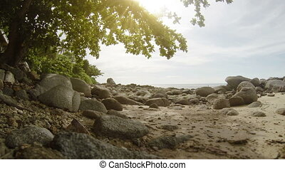 Sea shore with trees and rocks
