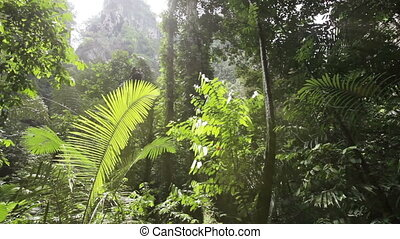 In the tropical jungle