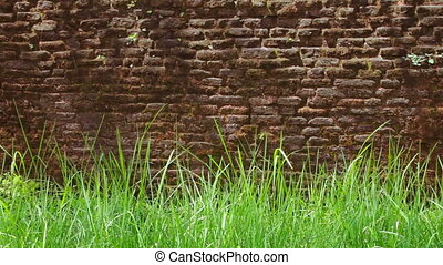 Red brick wall with green grass - Video 1920x1080 - Red...