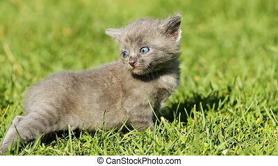 Kitten on the grass - Kitten on the green grass