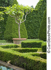 Boxwood garden design - English boxwood garden design,...