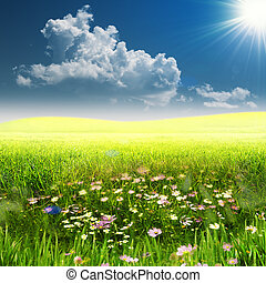 On the meadow. Summer natural landscape woth copy space