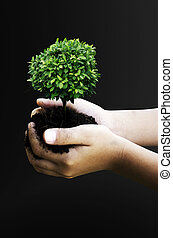 Green tree. - Trees and natural in your hand.