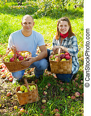Happy couple with apples harvest