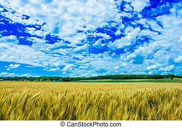 A wheat farm in sunny day in Kansas, USA