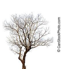 高, 定義, 白色, 樹, 背景