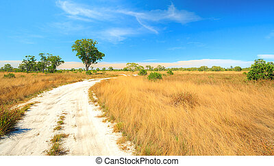 Panorama Savanah - Panorama Landscape of Savannah field in...