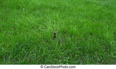 Garden Irrigation Spray