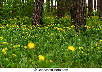 Green forest, spring time