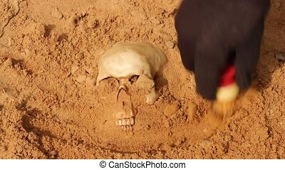 excavating a human skull - using a small brush to uncover a...