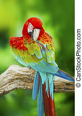Portrait of Macaw in nature background