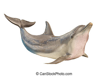 Dolphin isolated on white background with clipping part