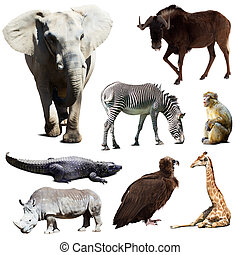 Set of few african animals over white background