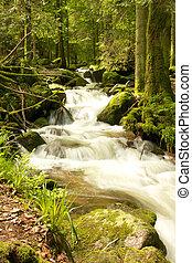Black Forest Brook