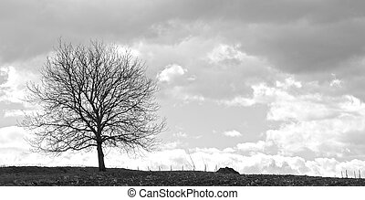 Tree in a storm 3 - Lonely tree on a field in front of a...