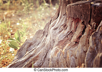 tree stump - Photo of ramshackle tree stump in the forest...