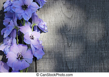 delphinium - larkspur on wooden planks - blue delphinium...