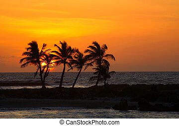 Sunrise in Riviera Maya - Rising sun and palm silhouettes on...
