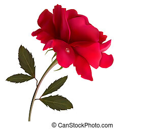 Holiday background with red beautiful rose. Vector