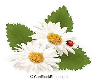 Nature summer daisy flower with ladybug. Vector...