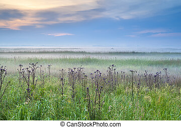 wildflowers in misty morning - wildflowers on meadow in...