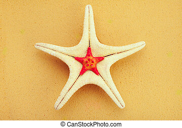 Two starfish on sand background