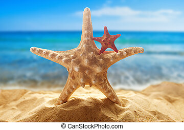 Starfishes on the beach - Big and small starfishes on the...
