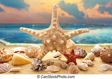 Starfish and seashells on the beach - Starfish and seashells...
