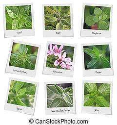 Colección, hierbas, especias, foto, marcos