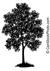 Maple tree and grass, silhouette - Maple tree with leaves...