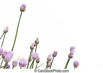 Chive Background