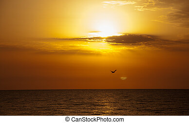 Early bird in sunrise. - Sunrise with clouds and bird.