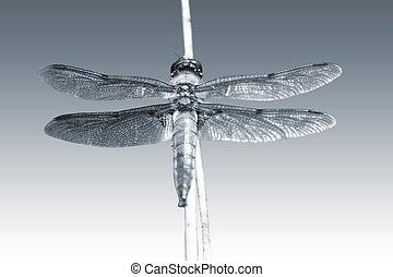 Dragonfly - The macro closeup of a large dragonfly, four...