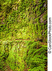 Moss wall with fern nearby - wall overgrown with moss near a...