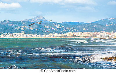 Seagull flying in Palma Bay.