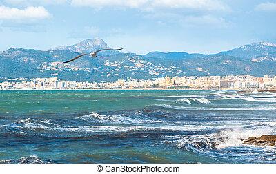 Seagull flying in Palma Bay.