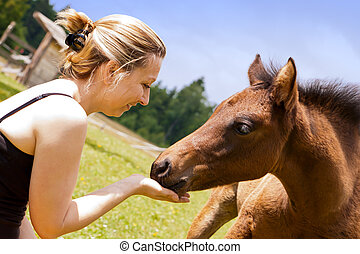 pretty woman feeds an foal - pretty woman is feeding an...