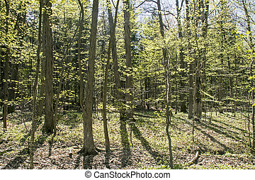 Eastern deciduous forest in spring