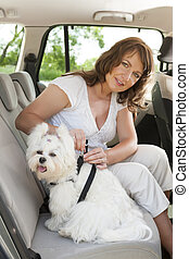 Dog safe in the car - Owner of the dog attaching safety...