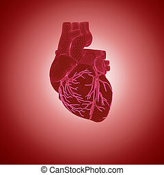 Human Heart - 3d rendering of human heart