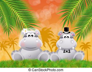 Hippos, miłość