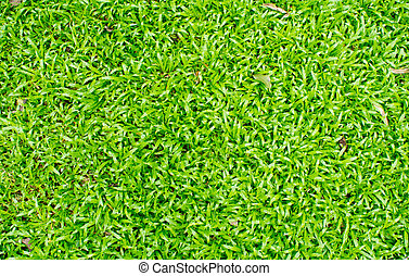 Grass Field - The beautiful green grass field background