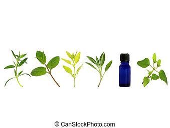 1.Herb Leaf Sprigs - Herb leaf sprigs of hyssop, chocolate...